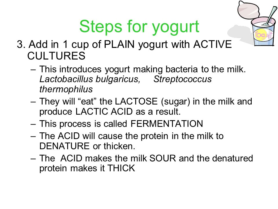 Steps for yogurt 3. Add in 1 cup of PLAIN yogurt with ACTIVE CULTURES –This introduces yogurt making bacteria to the milk. Lactobacillus bulgaricus, S