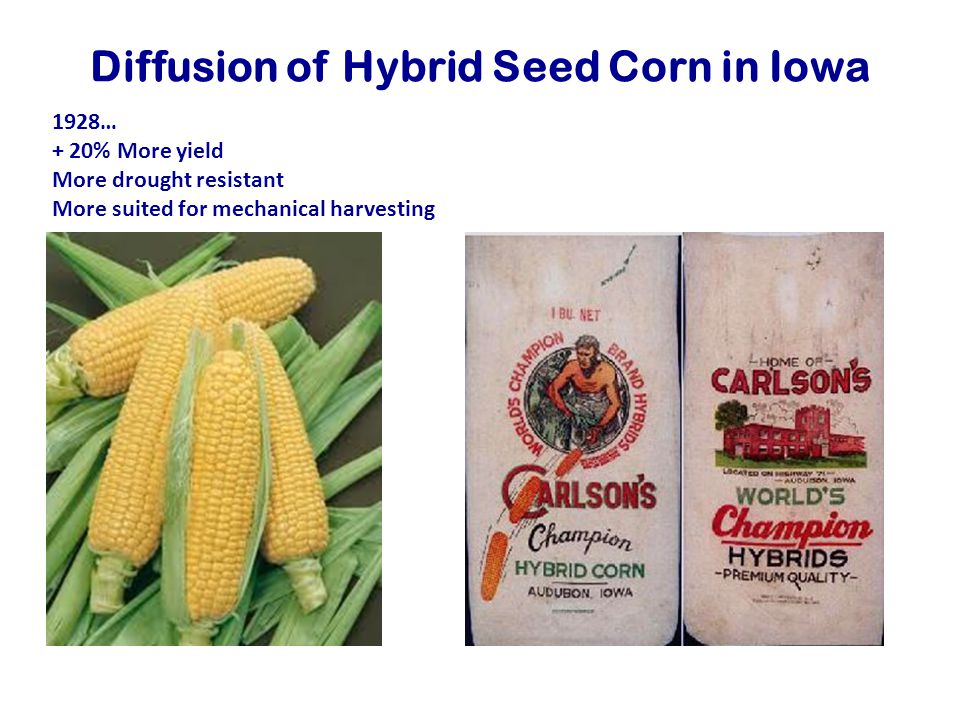 Diffusion of Hybrid Seed Corn in Iowa 1928… + 20% More yield More drought resistant More suited for mechanical harvesting