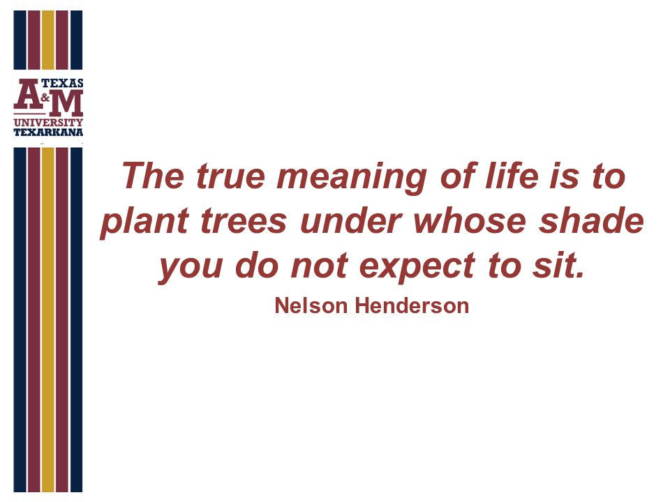 The true meaning of life is to plant trees under whose shade you do not expect to sit.