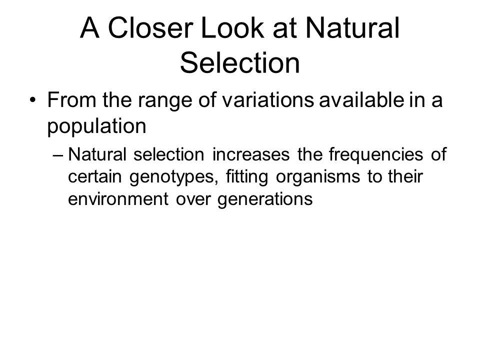 A Closer Look at Natural Selection From the range of variations available in a population –Natural selection increases the frequencies of certain genotypes, fitting organisms to their environment over generations