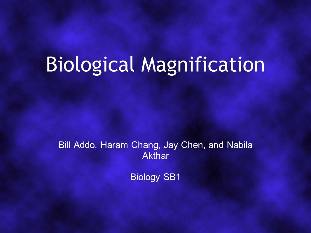 Biological Magnification Bill Addo, Haram Chang, Jay Chen, and Nabila Akthar Biology SB1