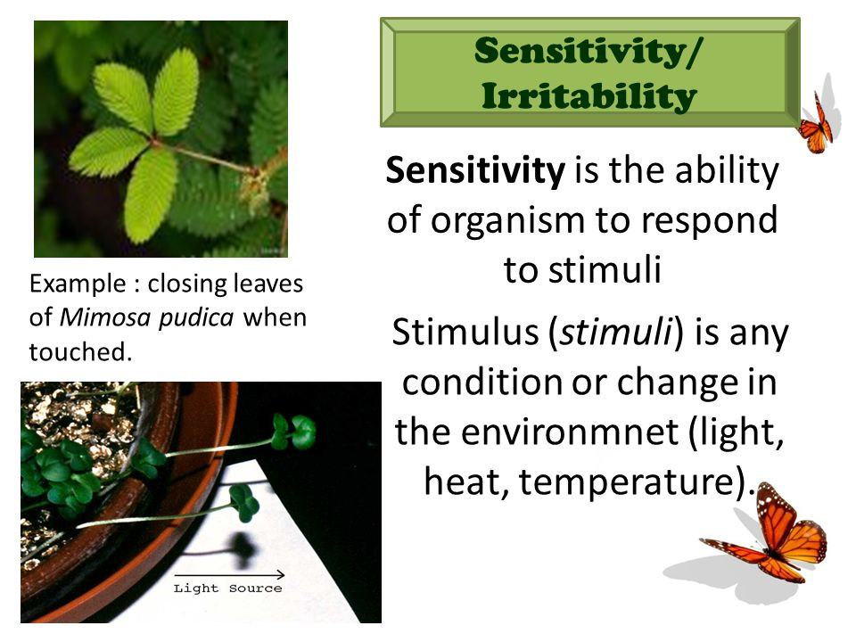 Sensitivity/ Irritability Sensitivity is the ability of organism to respond to stimuli Stimulus (stimuli) is any condition or change in the environmnet (light, heat, temperature).