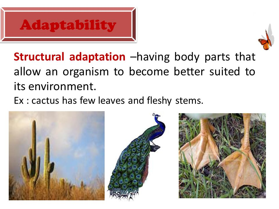 Adaptability Structural adaptation –having body parts that allow an organism to become better suited to its environment.