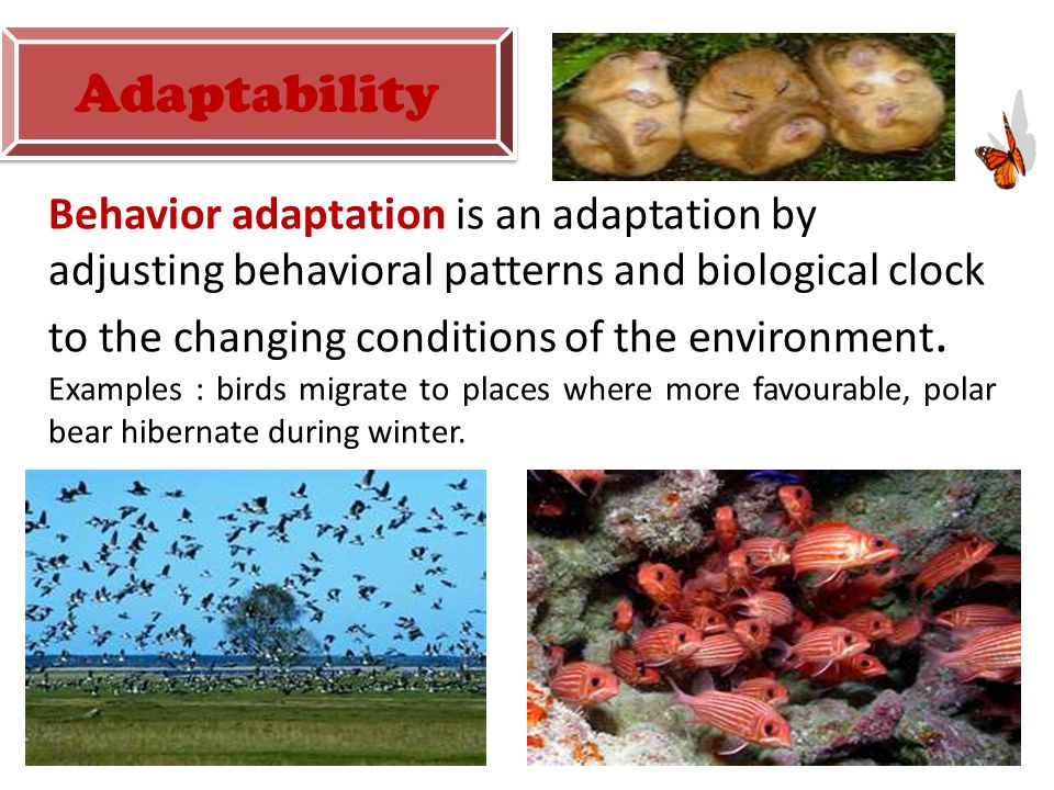 Behavior adaptation is an adaptation by adjusting behavioral patterns and biological clock to the changing conditions of the environment.