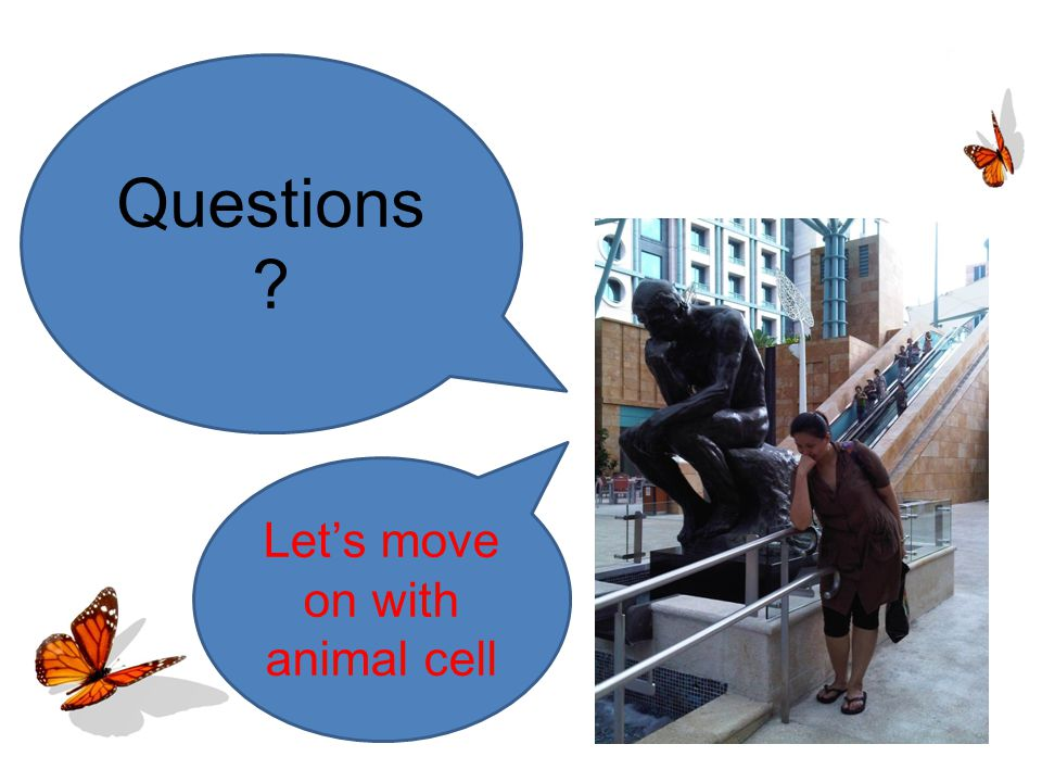 Questions Let's move on with animal cell