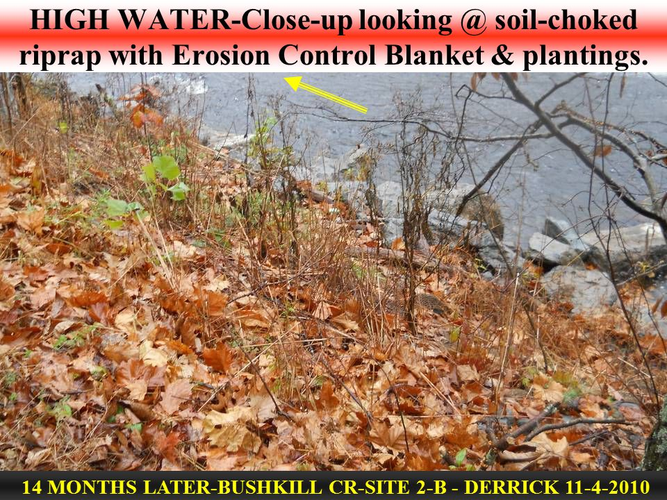 HIGH WATER-Close-up looking @ soil-choked riprap with Erosion Control Blanket & plantings. 14 MONTHS LATER-BUSHKILL CR-SITE 2-B - DERRICK 11-4-2010