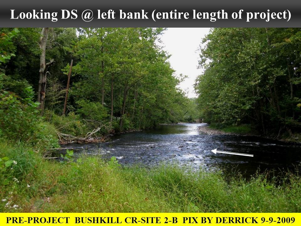 Looking DS @ left bank (entire length of project) PRE-PROJECT BUSHKILL CR-SITE 2-B PIX BY DERRICK 9-9-2009