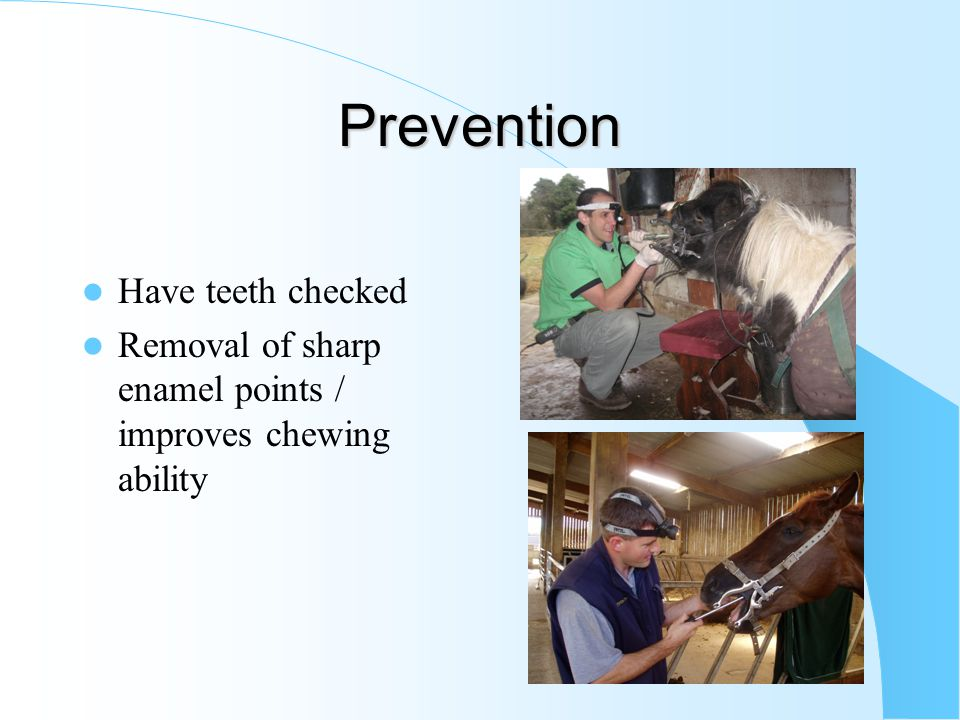 Prevention Have teeth checked Removal of sharp enamel points / improves chewing ability