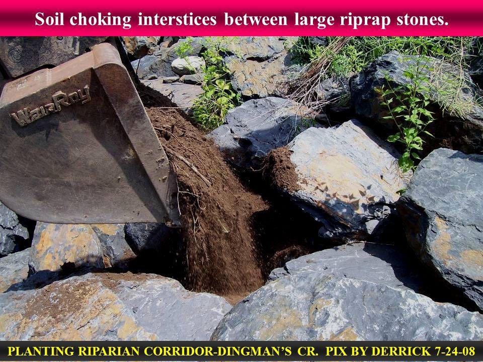 Soil choking interstices between large riprap stones. PLANTING RIPARIAN CORRIDOR-DINGMAN'S CR. PIX BY DERRICK 7-24-08