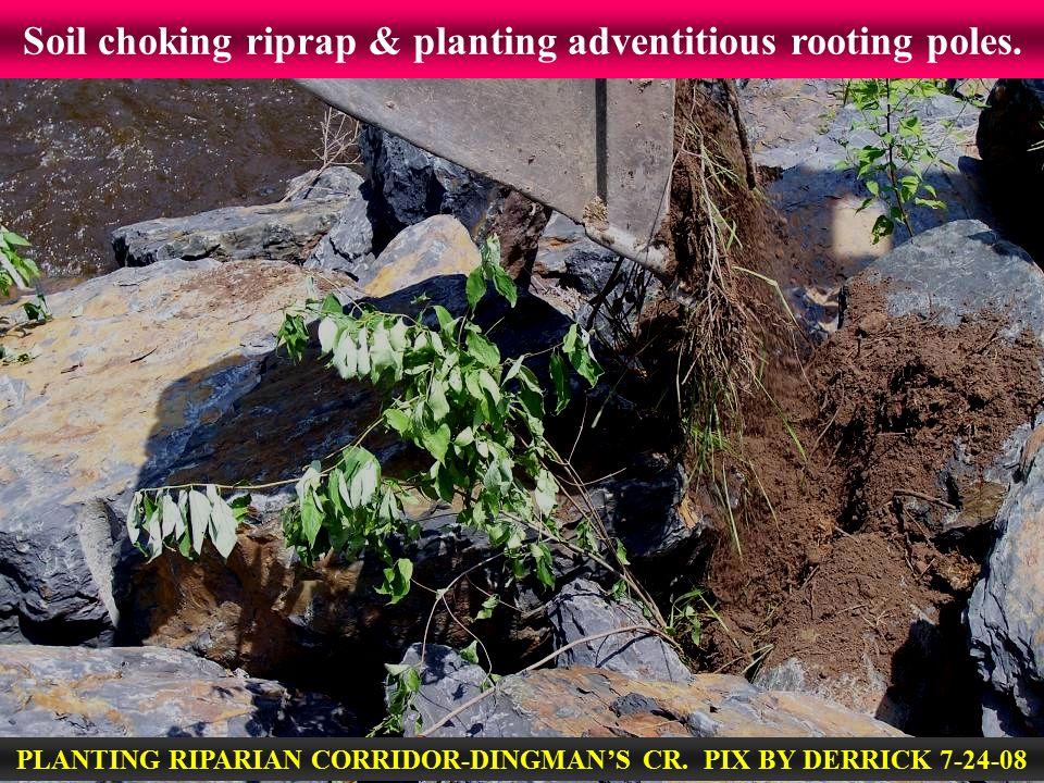 Soil choking riprap & planting adventitious rooting poles. PLANTING RIPARIAN CORRIDOR-DINGMAN'S CR. PIX BY DERRICK 7-24-08