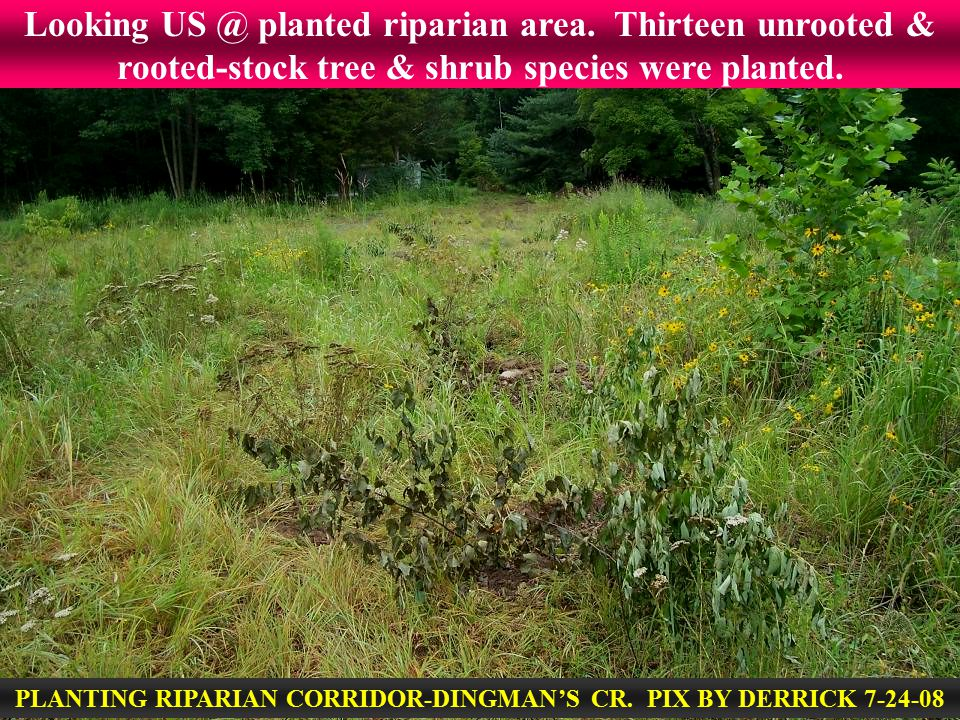 Looking US @ planted riparian area. Thirteen unrooted & rooted-stock tree & shrub species were planted. PLANTING RIPARIAN CORRIDOR-DINGMAN'S CR. PIX B