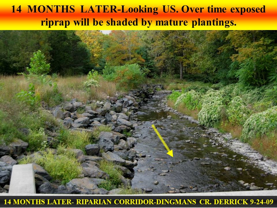 14 MONTHS LATER-Looking US. Over time exposed riprap will be shaded by mature plantings. 14 MONTHS LATER- RIPARIAN CORRIDOR-DINGMANS CR. DERRICK 9-24-