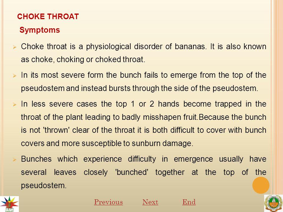 CHOKE THROAT  Choke throat is a physiological disorder of bananas.