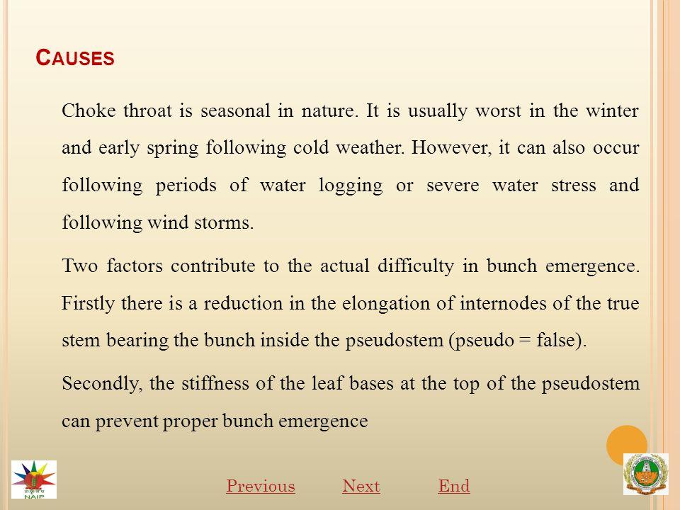 C AUSES Choke throat is seasonal in nature.