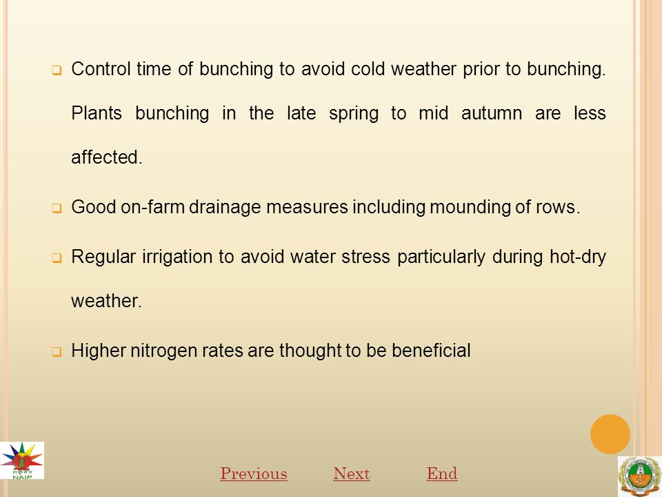  Control time of bunching to avoid cold weather prior to bunching.
