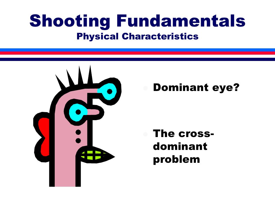 Shooting Fundamentals Physical Characteristics l Dominant eye? l The cross- dominant problem