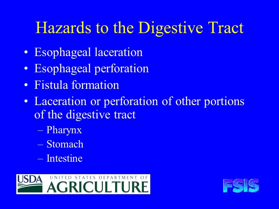 Hazards to the Digestive Tract Esophageal laceration Esophageal perforation Fistula formation Laceration or perforation of other portions of the digestive tract –Pharynx –Stomach –Intestine
