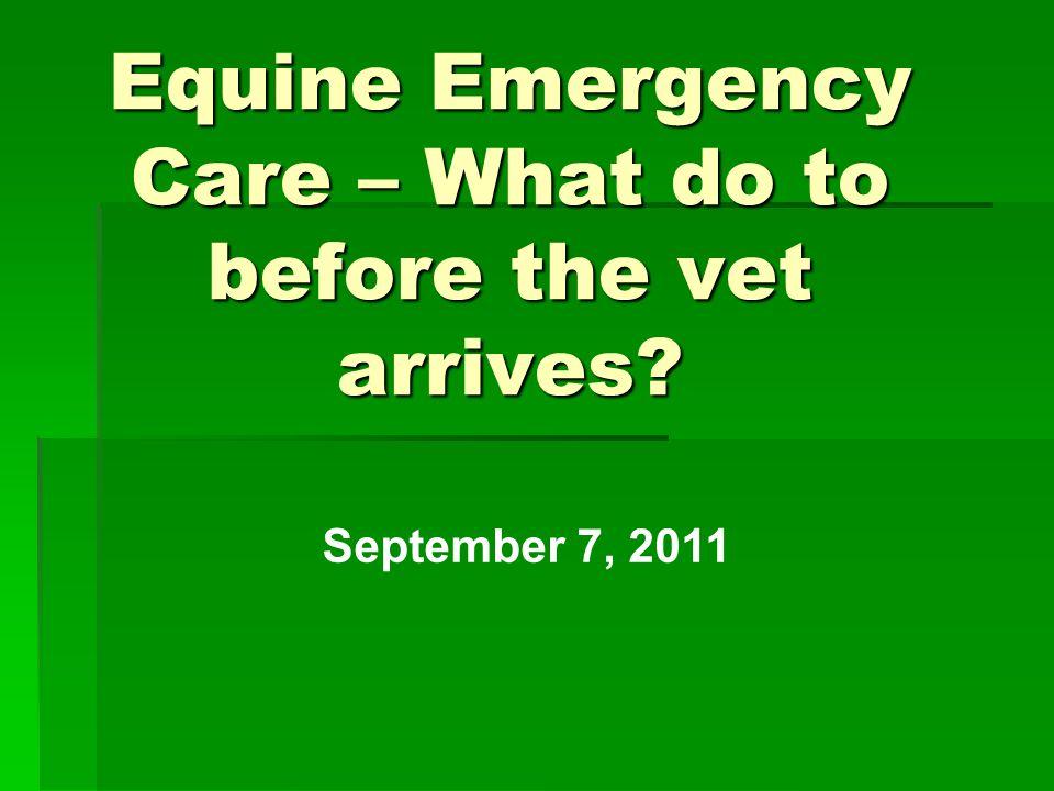 Equine Emergency Care – What do to before the vet arrives September 7, 2011