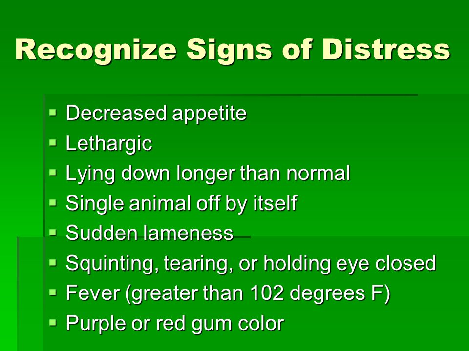 Recognize Signs of Distress  Decreased appetite  Lethargic  Lying down longer than normal  Single animal off by itself  Sudden lameness  Squinting, tearing, or holding eye closed  Fever (greater than 102 degrees F)  Purple or red gum color