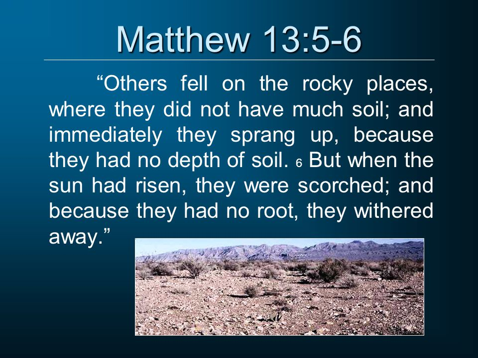 Matthew 13:5-6 Others fell on the rocky places, where they did not have much soil; and immediately they sprang up, because they had no depth of soil.
