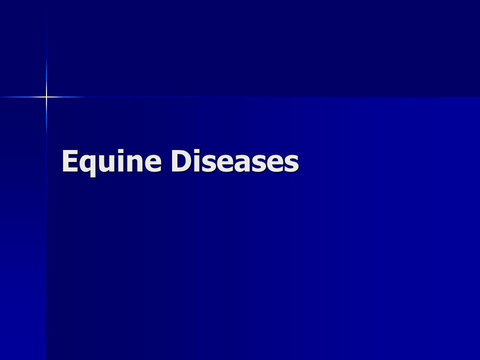 Equine Diseases