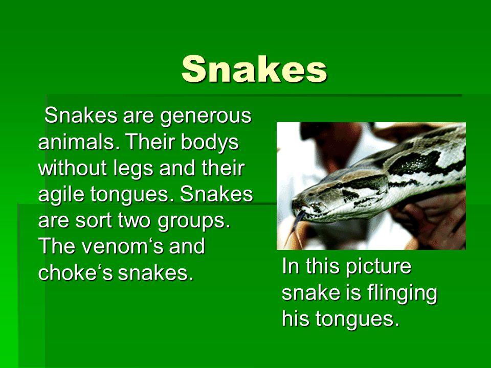The venom's snakes  The venom's snakes are (mostly) very danger.