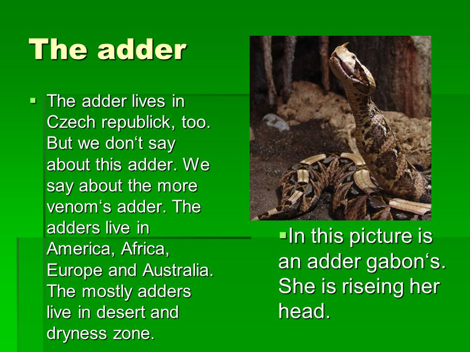 A rattlesnake TTTThis snake is very danger.A rattlesnake lives in desert as in Texas.