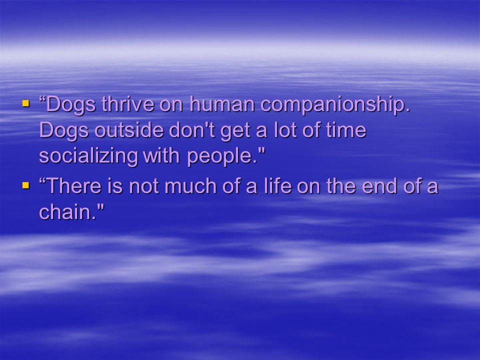     Dogs thrive on human companionship.