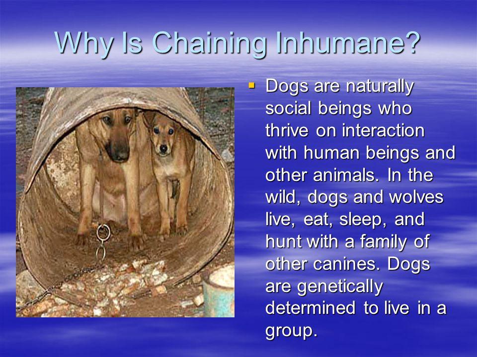 Why Is Chaining Inhumane.
