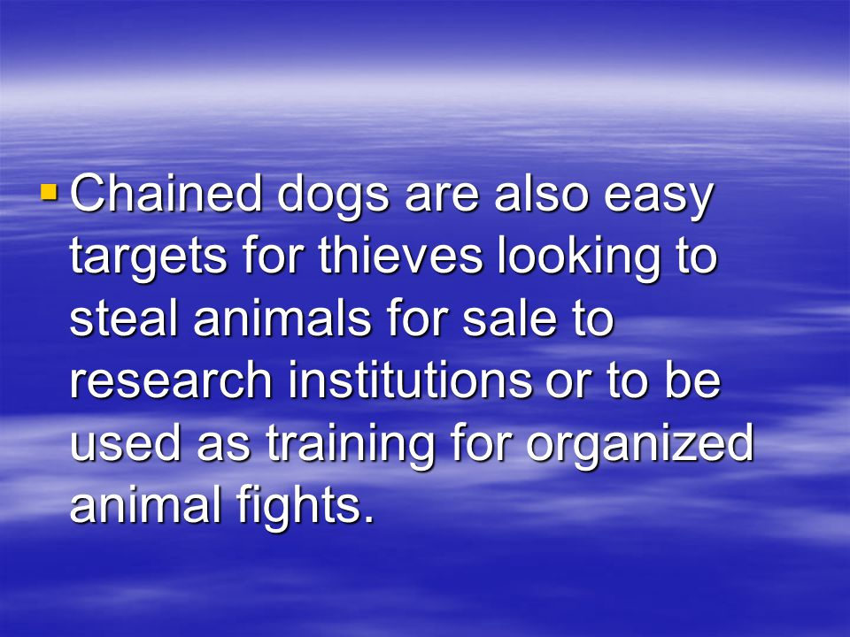  Chained dogs are also easy targets for thieves looking to steal animals for sale to research institutions or to be used as training for organized animal fights.