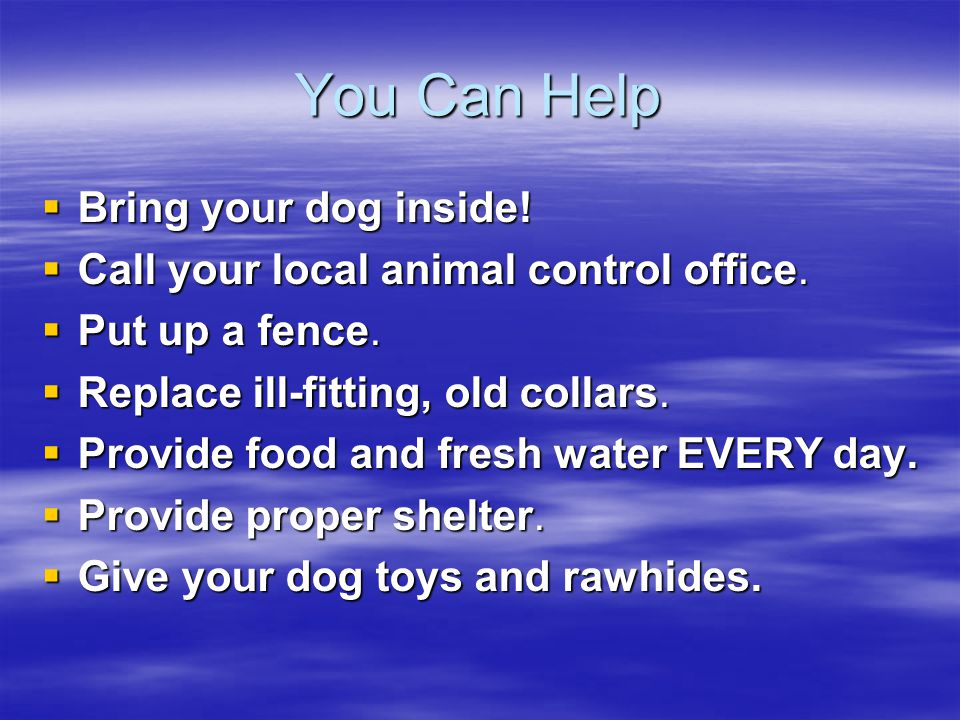 You Can Help  Bring your dog inside.  Bring your dog inside.