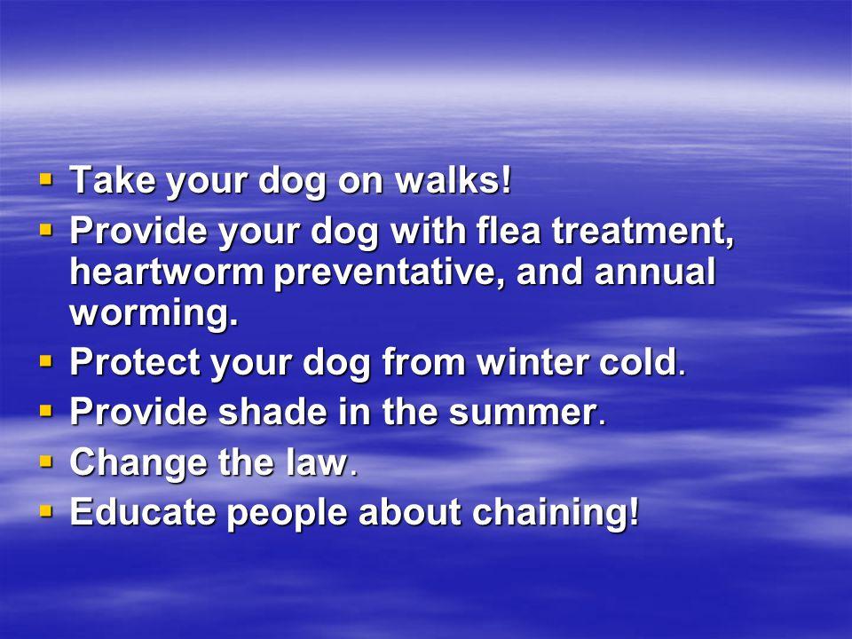  Take your dog on walks.