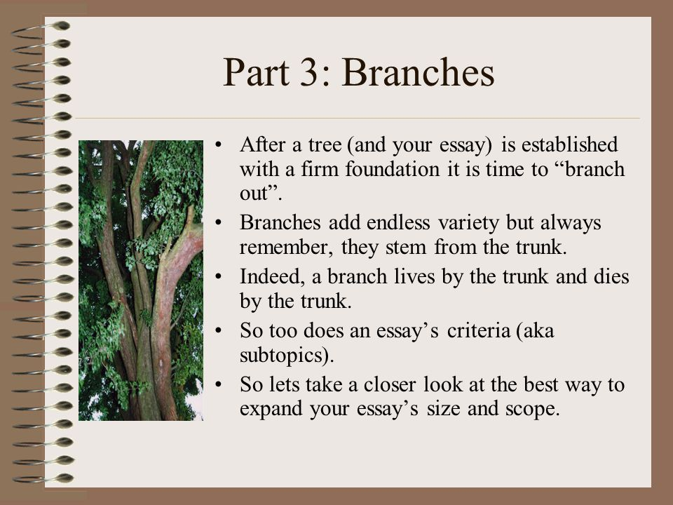 Part 3: Branches After a tree (and your essay) is established with a firm foundation it is time to branch out .