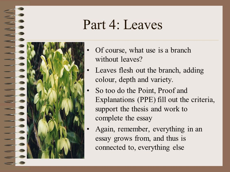 Part 4: Leaves Of course, what use is a branch without leaves.