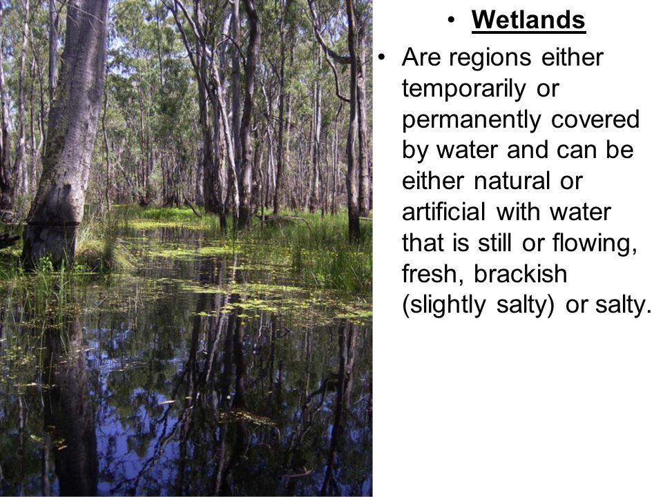 Wetlands Are regions either temporarily or permanently covered by water and can be either natural or artificial with water that is still or flowing, fresh, brackish (slightly salty) or salty.