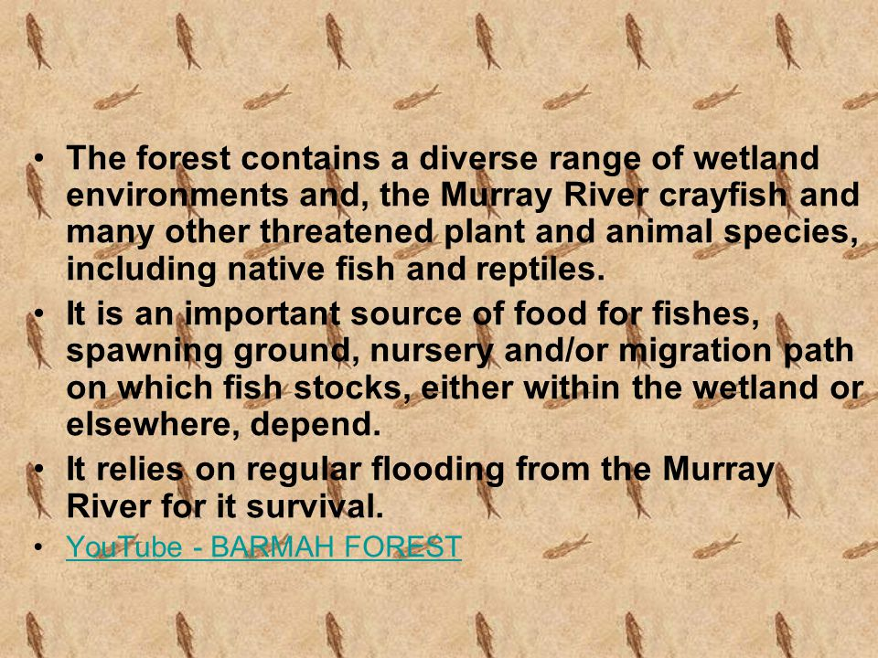 The forest contains a diverse range of wetland environments and, the Murray River crayfish and many other threatened plant and animal species, including native fish and reptiles.
