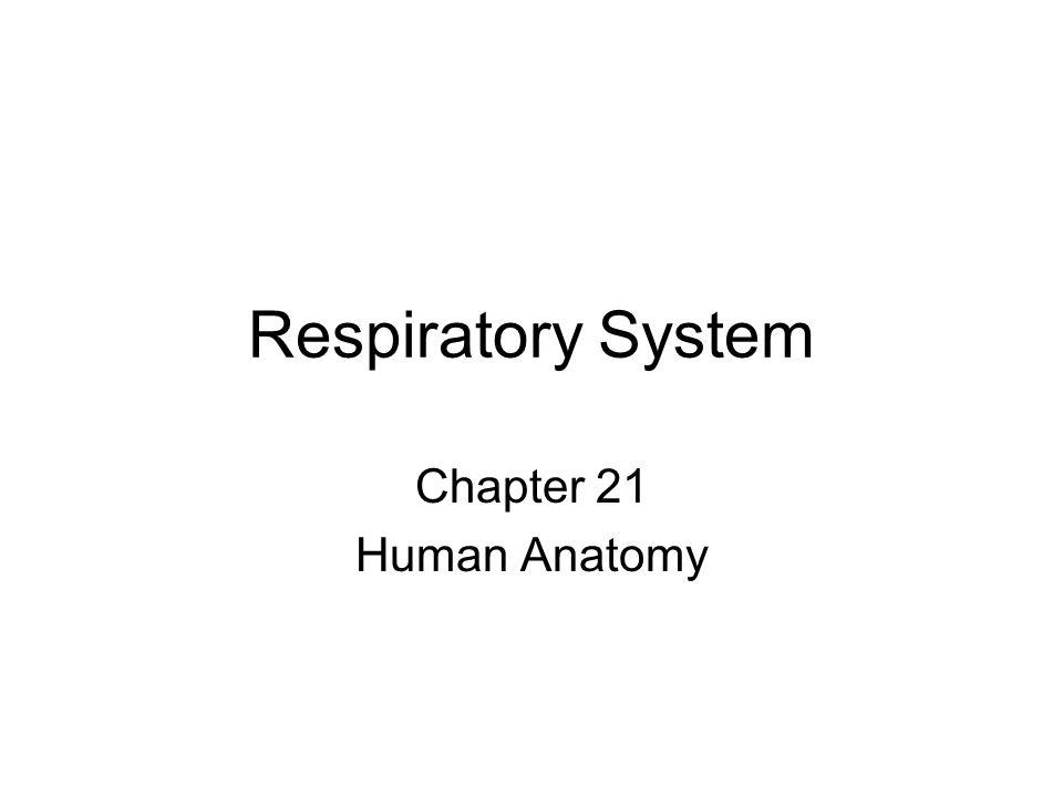 Respiratory System Chapter 21 Human Anatomy