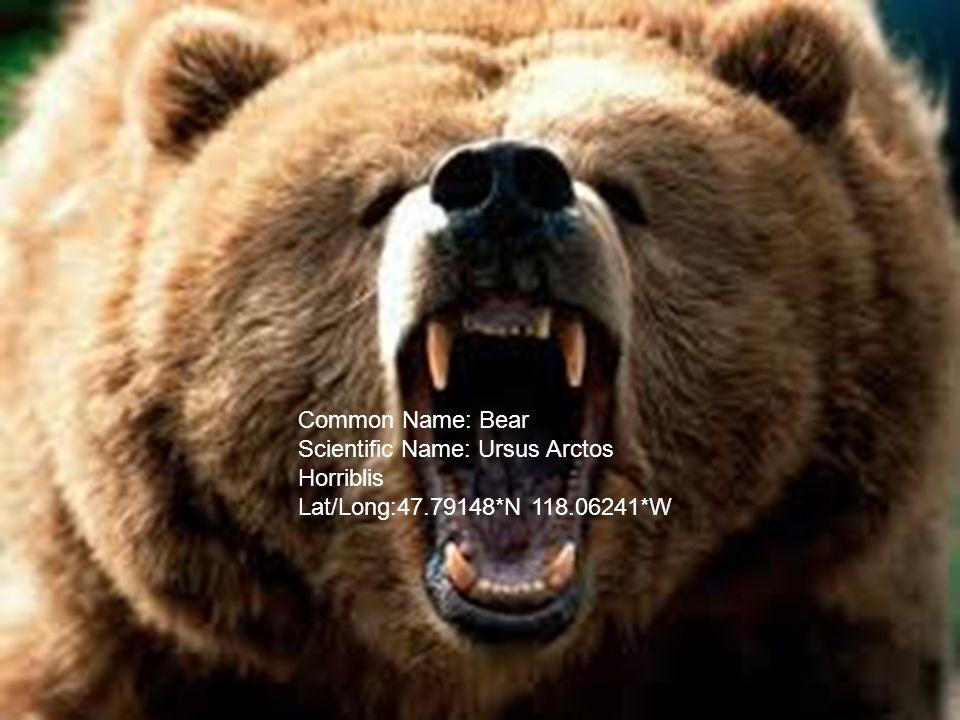 Common Name: Bear Scientific Name: Ursus Arctos Horriblis Lat/Long:47.79148*N 118.06241*W