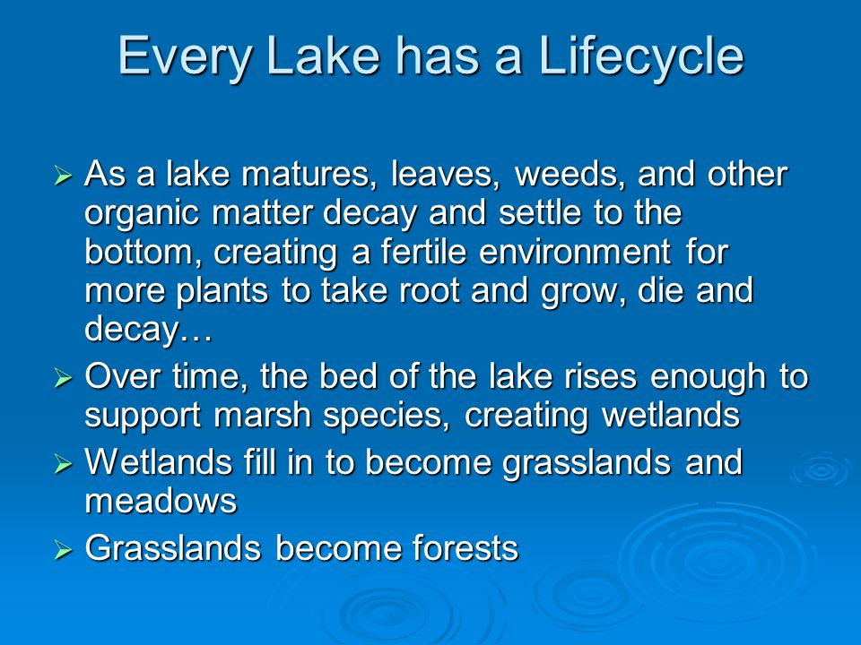 Every Lake has a Lifecycle  As a lake matures, leaves, weeds, and other organic matter decay and settle to the bottom, creating a fertile environment