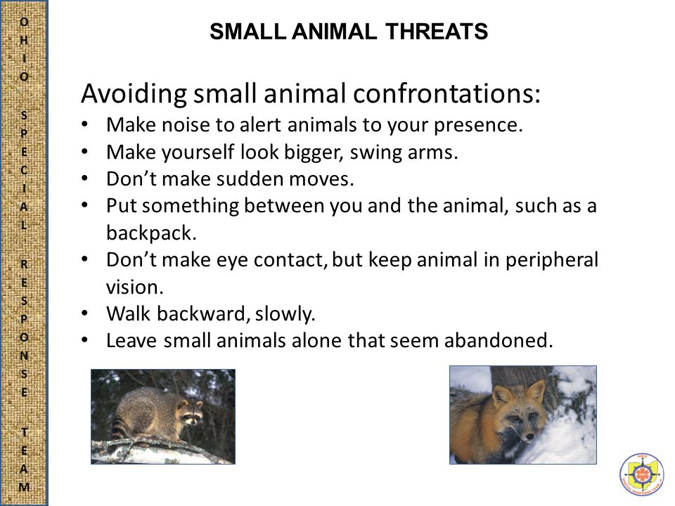Avoiding small animal confrontations: Make noise to alert animals to your presence.