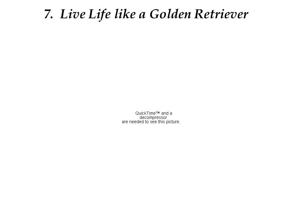 7. Live Life like a Golden Retriever