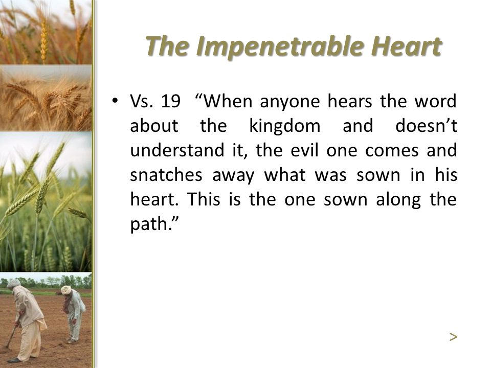 """The Impenetrable Heart Vs. 19 """"When anyone hears the word about the kingdom and doesn't understand it, the evil one comes and snatches away what was s"""