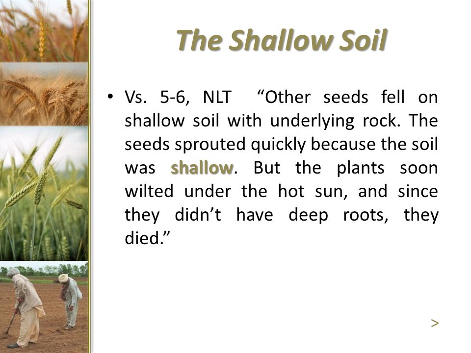 """The Shallow Soil shallow Vs. 5-6, NLT """"Other seeds fell on shallow soil with underlying rock. The seeds sprouted quickly because the soil was shallow."""