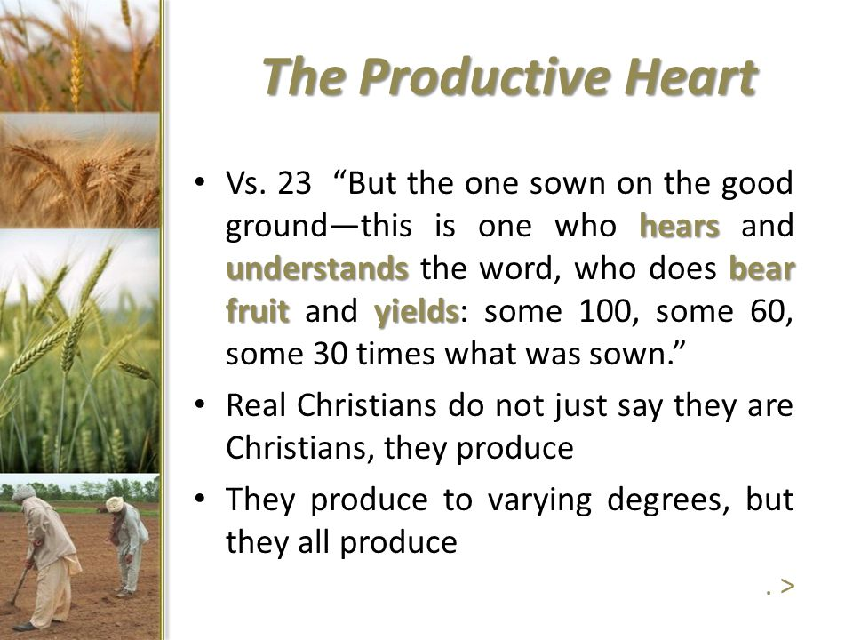 """The Productive Heart hears understandsbear fruityields Vs. 23 """"But the one sown on the good ground—this is one who hears and understands the word, who"""