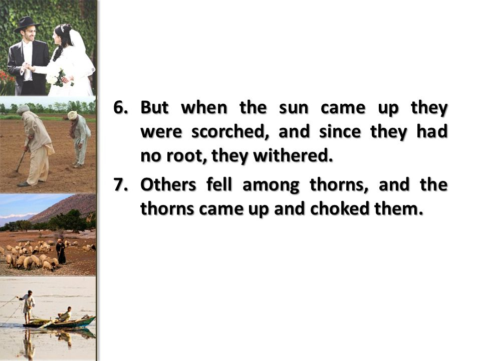 6.But when the sun came up they were scorched, and since they had no root, they withered.