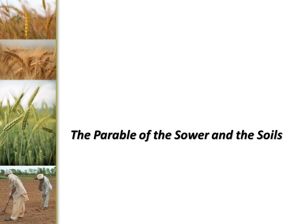 The Parable of the Sower and the Soils