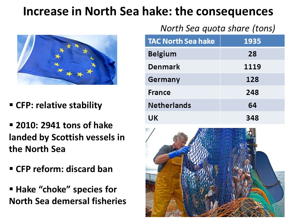 Increase in North Sea hake: the consequences  CFP: relative stability  2010: 2941 tons of hake landed by Scottish vessels in the North Sea  CFP reform: discard ban  Hake choke species for North Sea demersal fisheries TAC North Sea hake1935 Belgium28 Denmark1119 Germany128 France248 Netherlands64 UK348 North Sea quota share (tons)