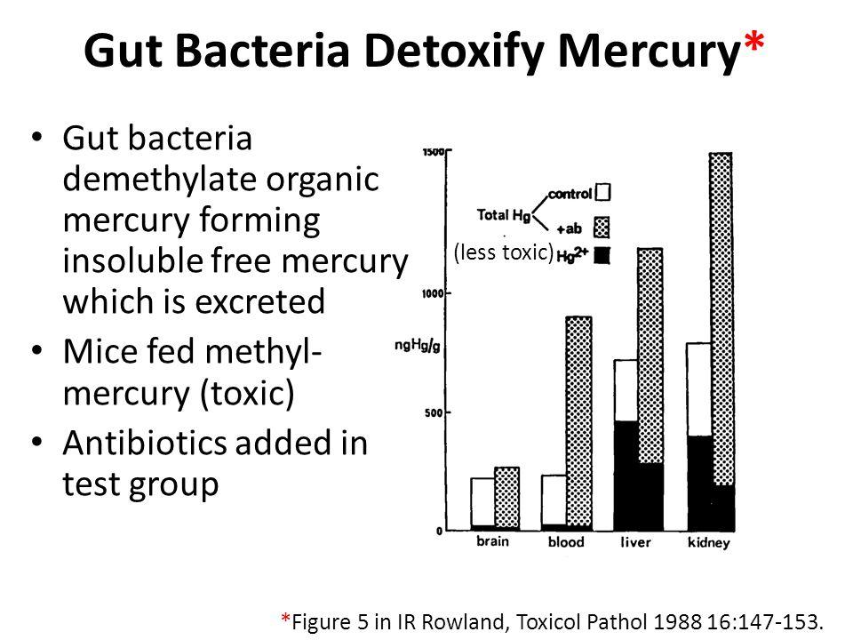 Gut Bacteria Detoxify Mercury* Gut bacteria demethylate organic mercury forming insoluble free mercury which is excreted Mice fed methyl- mercury (toxic) Antibiotics added in test group *Figure 5 in IR Rowland, Toxicol Pathol 1988 16:147-153.