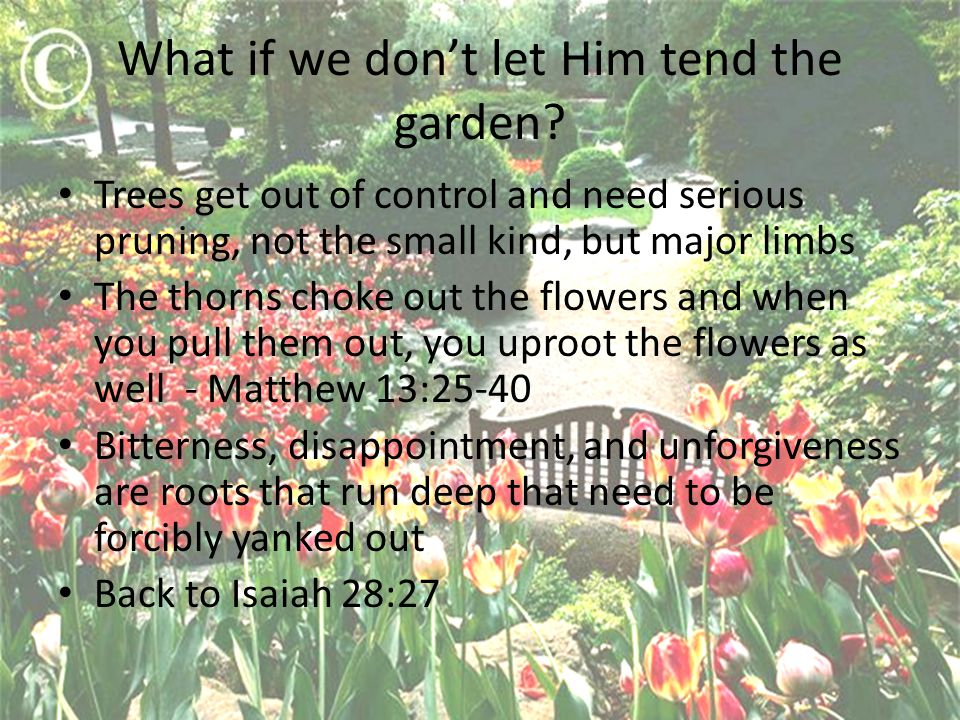 What if we don't let Him tend the garden.