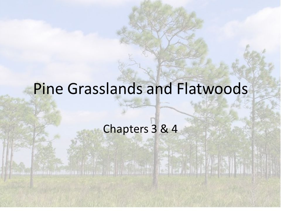 Pine Grasslands and Flatwoods Chapters 3 & 4